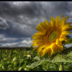 Herbst, halt (Vivitar Serie1 1.8 / 28mm und 2.3 / 135mm)