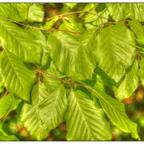 Wetter und Licht im April (SMC Pentax 3.5 / 35-105mm @ f3.5 / 35mm)