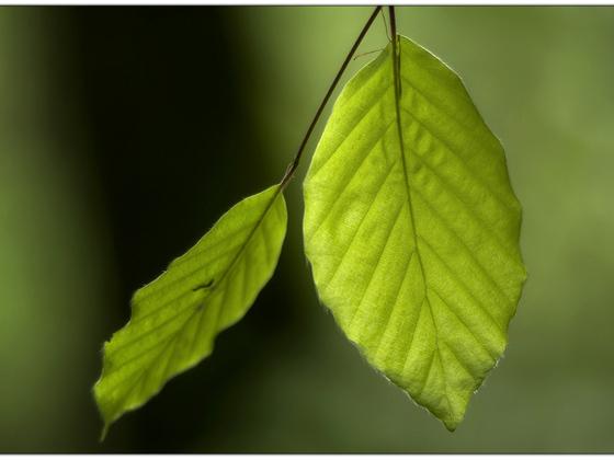Farbe Grün .. Vivitar Serie1 - 2.3 / 135mm @2.3 / D7000