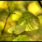 Herbst- Licht und Farbenpracht (Vivitar Serie1 2.3 / 135mm @2.3)