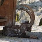 Im Tierpark Dälhölzli Bern