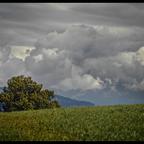 Wiese, Baum, Wolken