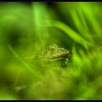 Frosch-Perspektive ..