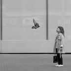Ich bin eine Taube, und du?