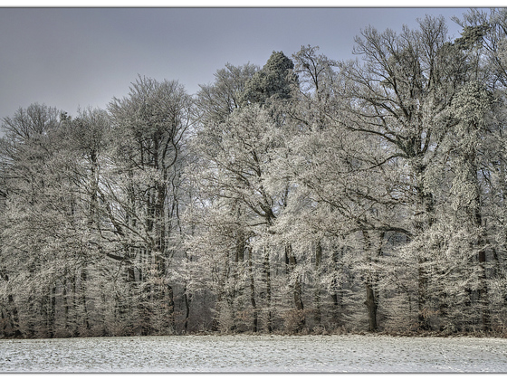(noch einmal) Winter .. (MF-Nikkor 28-85mm / D7000)