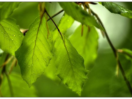 Nach dem Regen (AF-Nikkor 4.0 / 80-210mm @ f4.5 / D90)