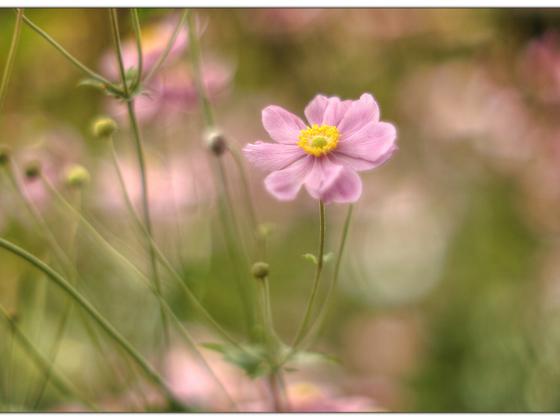 Foto-Malerei (Porst 1:1.2/ 55mm @ 1.2 / Canon 5D MkI)