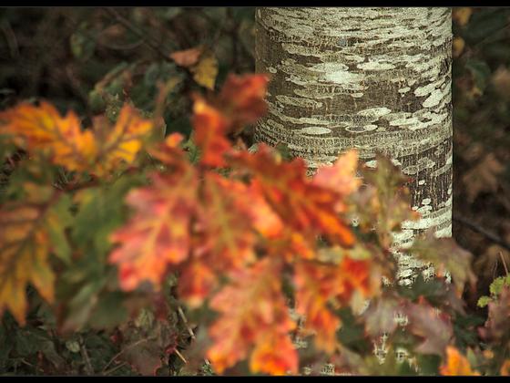 Seeland-Herbst ..