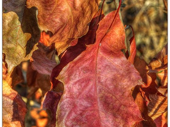Im November ist's nicht nur grau .. (MF-Nikkor 28 - 85mm @f4.5 / D7000)