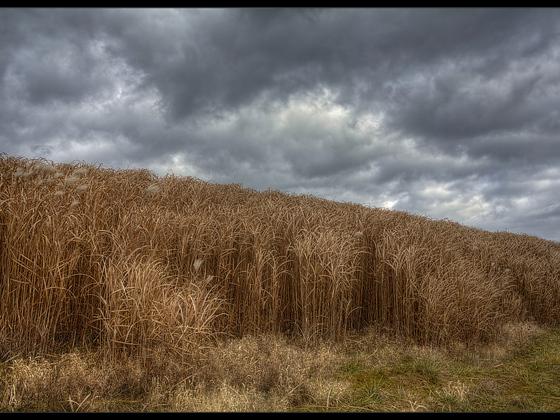 November (Vivitar Serie1 3.8 / 24-48mm @5.6)