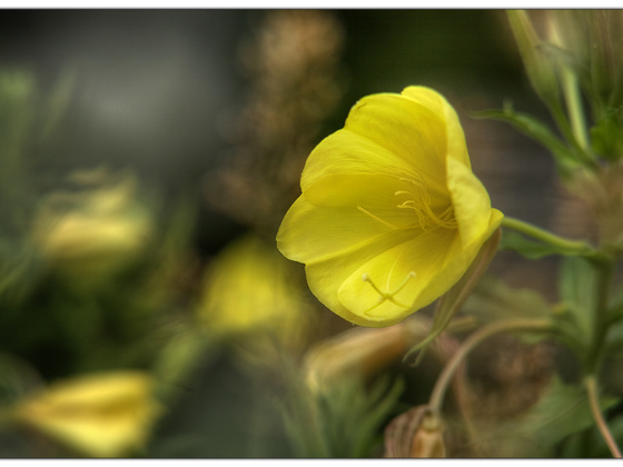 Foto-Malerei (Vivitar Serie1 2.3/135mm @2.3 / 5D)