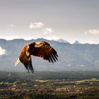 Adler der mächtige...