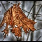 Ein letztes Winterbild