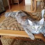 Die katze meiner Cousine