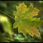 Herbst- Licht und Farben ..