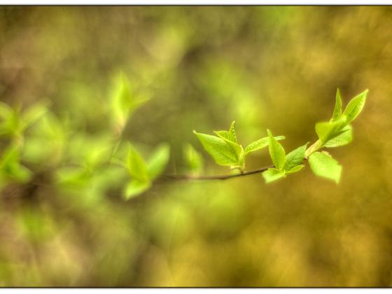 Es wird Frühling (Porst 1:1.2 / 50mm @1.2)